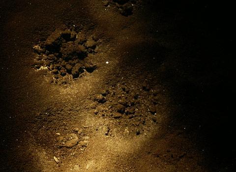 Jeskynní perly